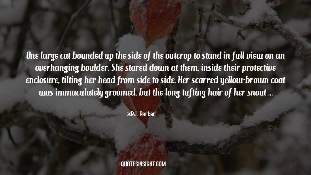 Coat quotes by P.J. Parker
