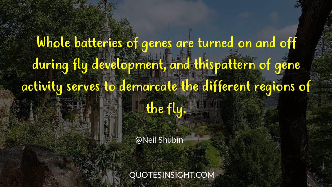 Swim The Fly quotes by Neil Shubin