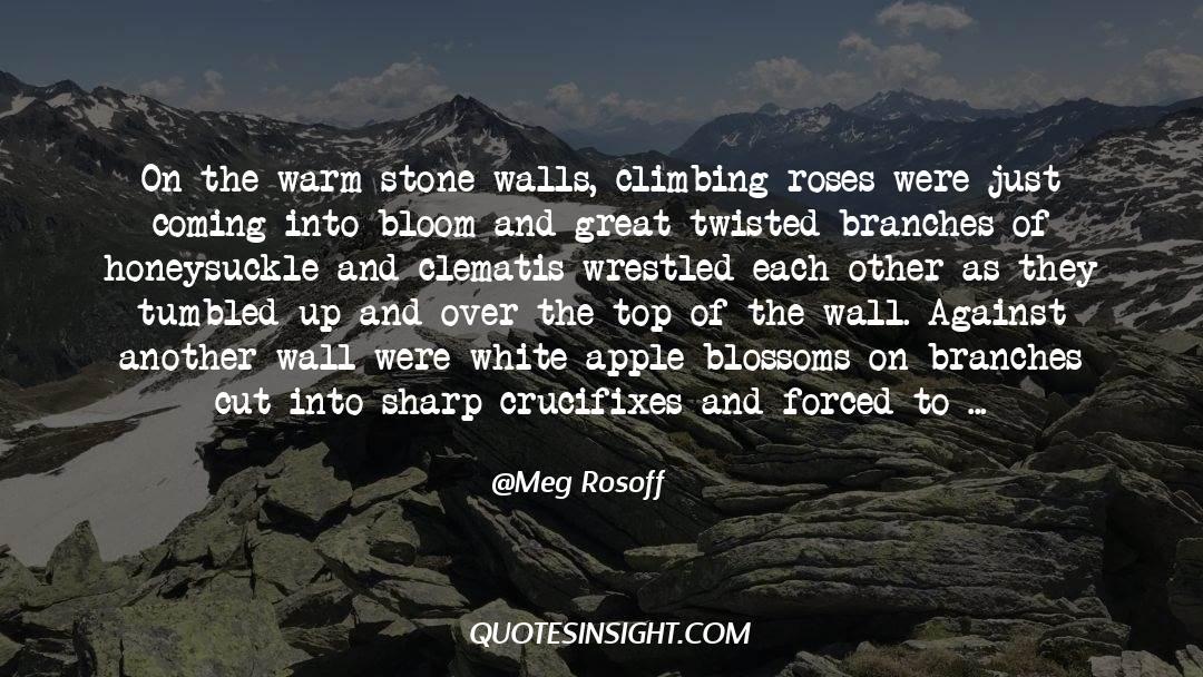 Viking War quotes by Meg Rosoff