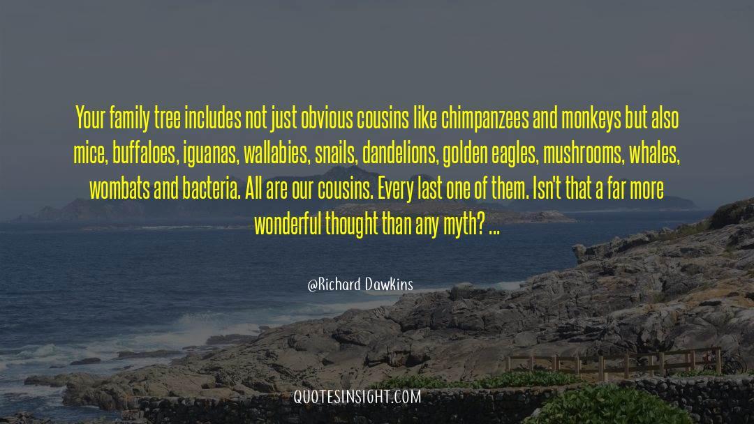 Wallabies Quotes